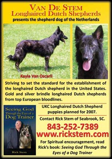 View all of Van De Stem longhaired Dutch Shepherds